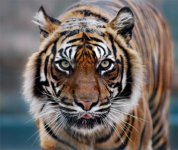 safari_zoo4